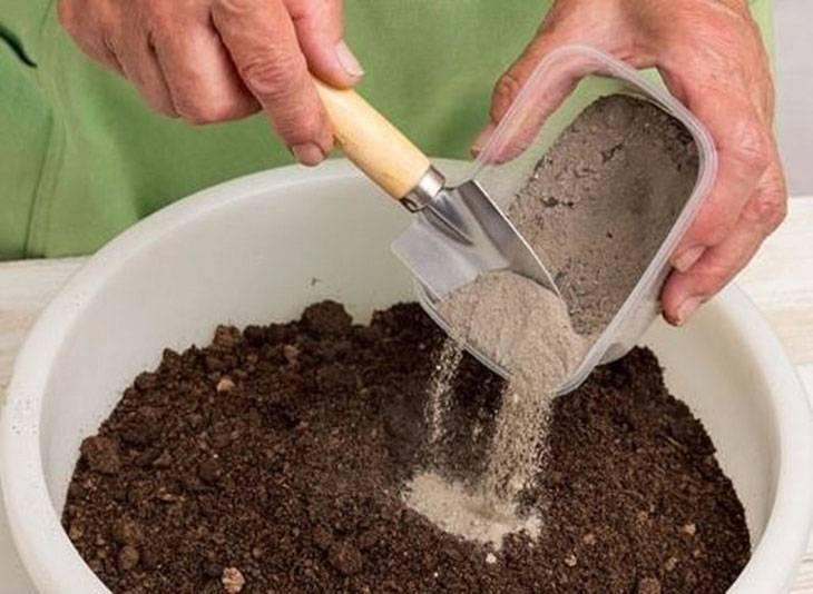 Грунт для спатифиллума – какая земля нужна для цветка