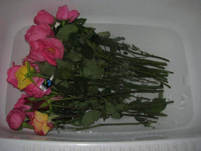 Как хранить лепестки цветов в домашних условиях