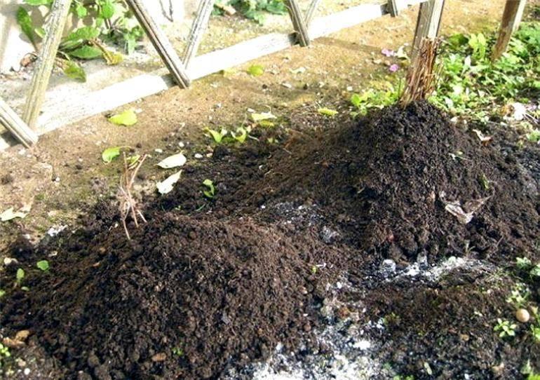 Какой грунт нужен для садовых роз на улице: как правильно подготовить почву