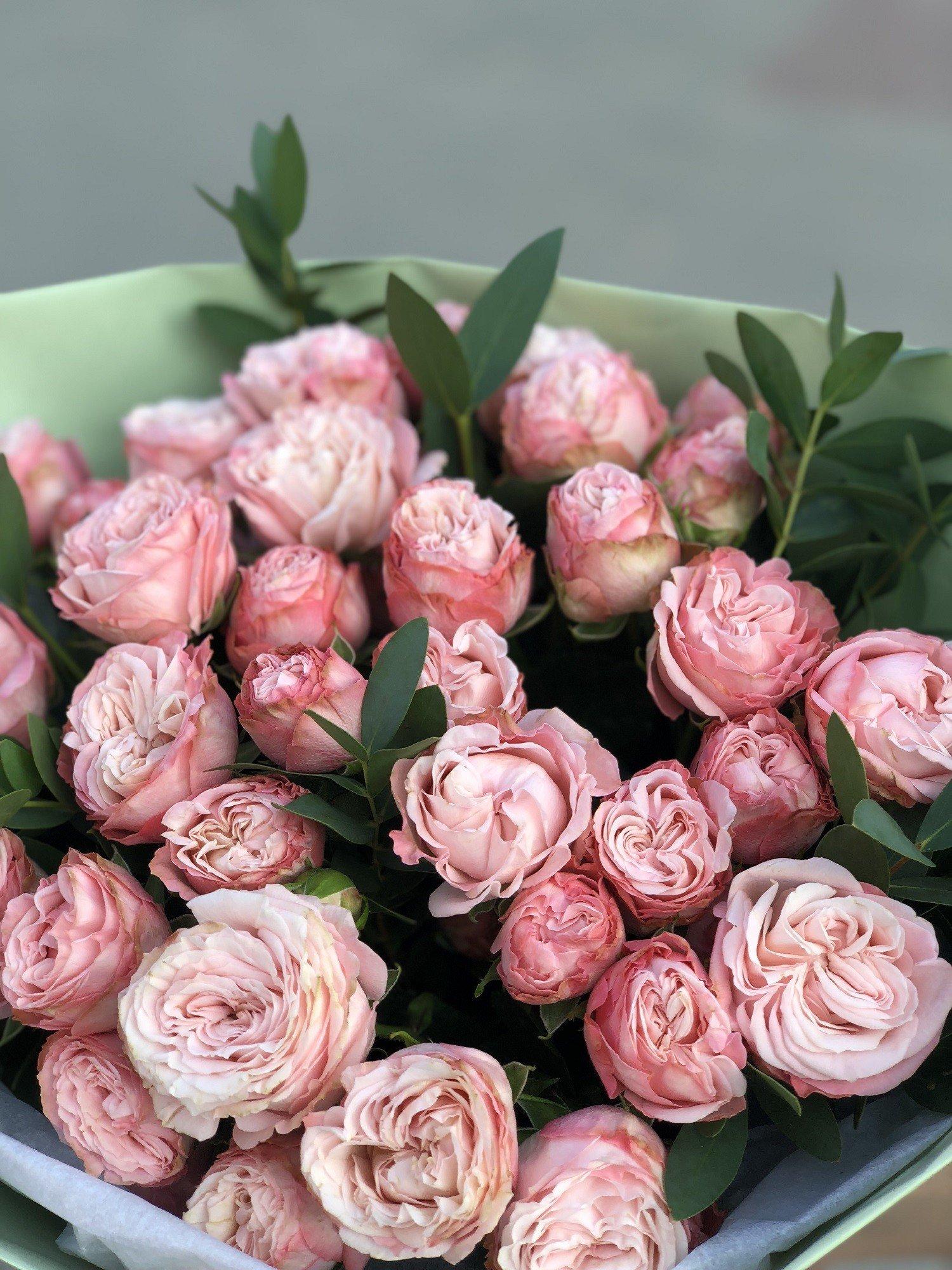 Описание пионовидного сорта кустовой розы леди (мадам) бомбастик: как ухаживать