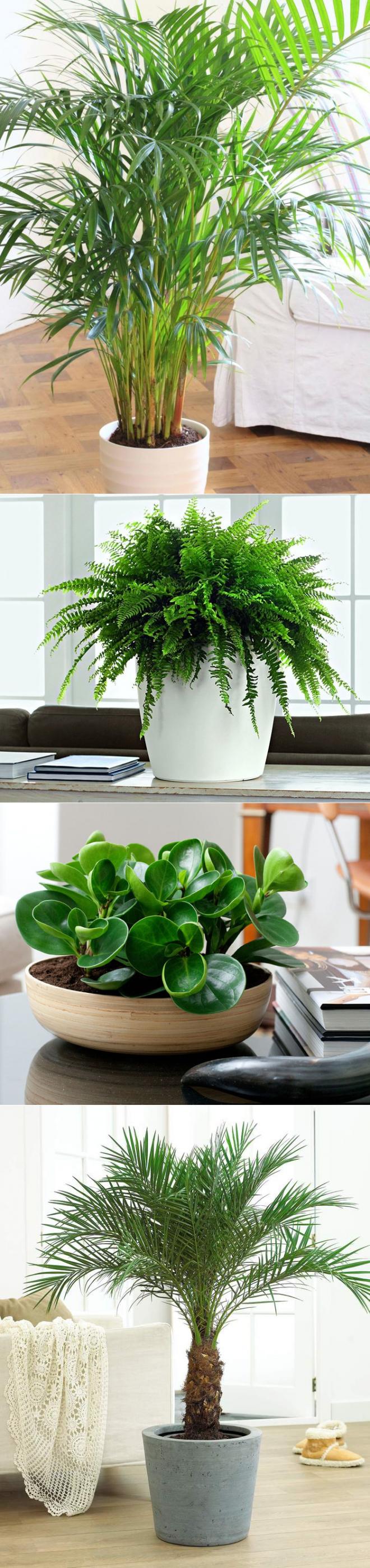 10 лучших комнатных растений очищающих воздух в квартире