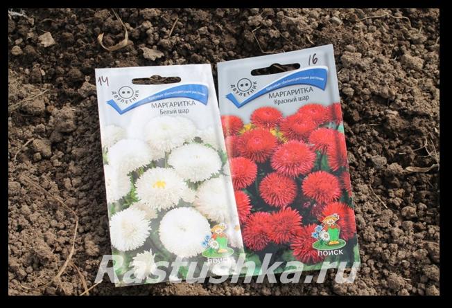 Цветы маргаритки многолетние: фото, описание, как выглядит маргаритка и как её вырастить