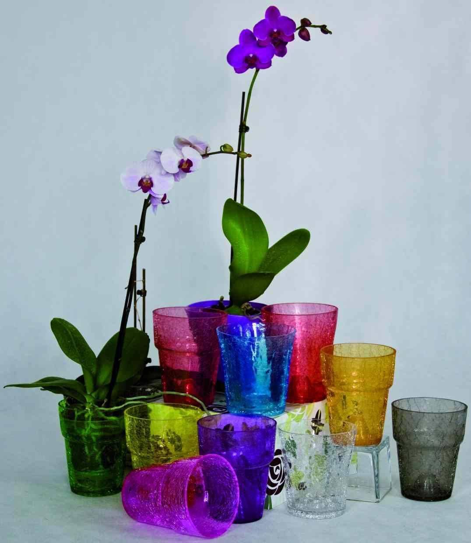 Горшки для орхидеи: пластик, стекло, керамика. плюсы и минусы керамических горшков для фаленопсисов.