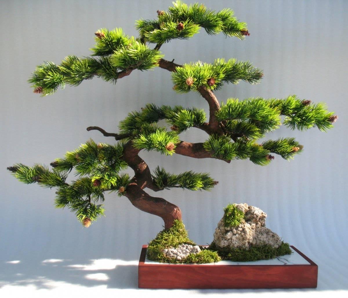 Правильный уход за деревом бонсай в домашних условиях