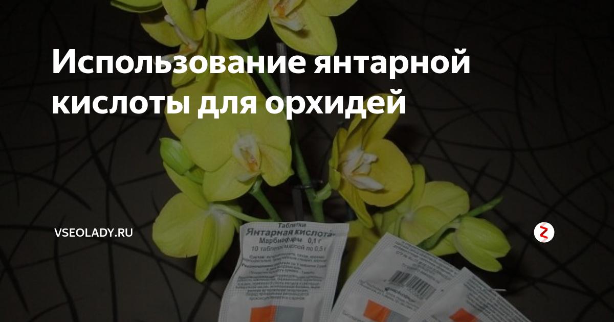 Узнайте, как часто можно поливать орхидею янтарной кислотой?