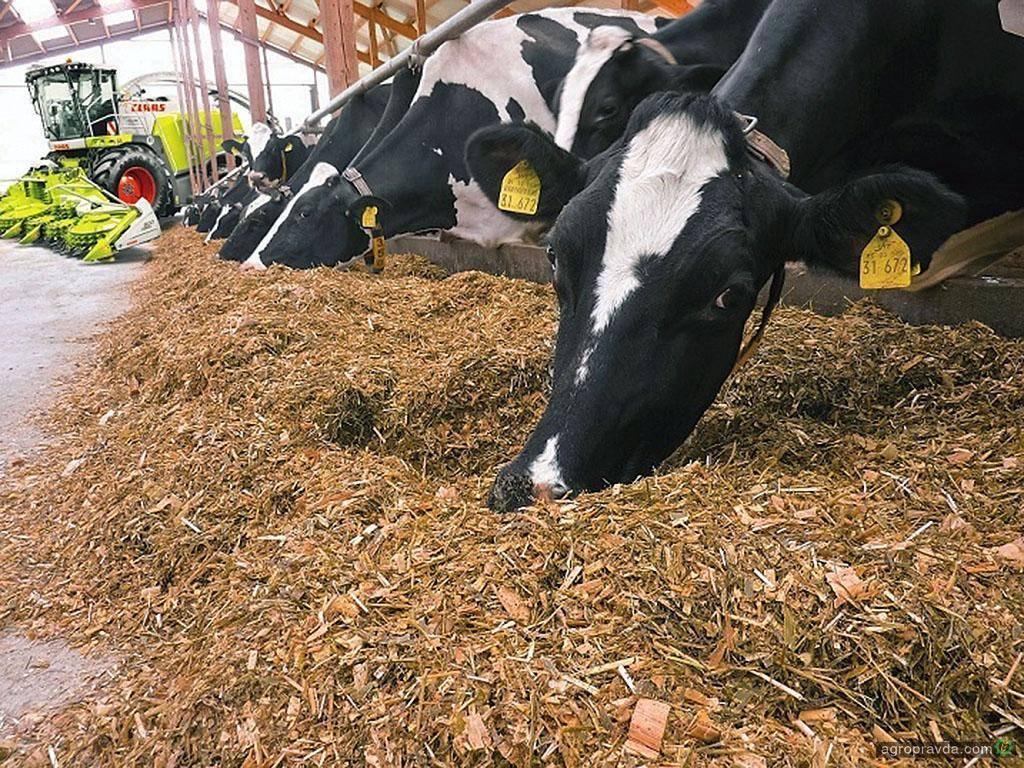Люпин кормовой - как получить высокий и качественный урожай, основные правила возделывания культуры
