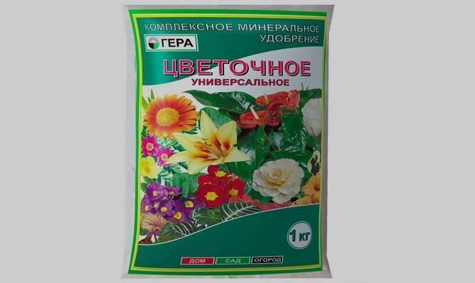 Лилии: посадка и уход в саду, хранение после цветения, сорта