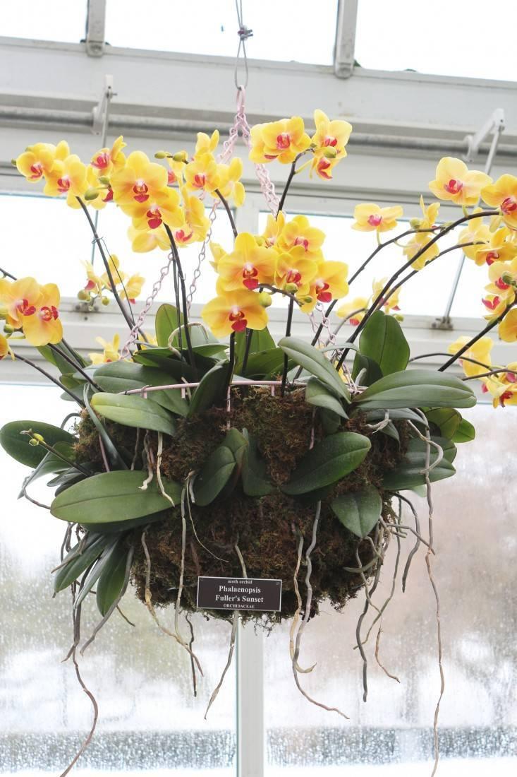 Правила ухода за орхидеями в домашних условиях, если отцвела: полив, удобрения