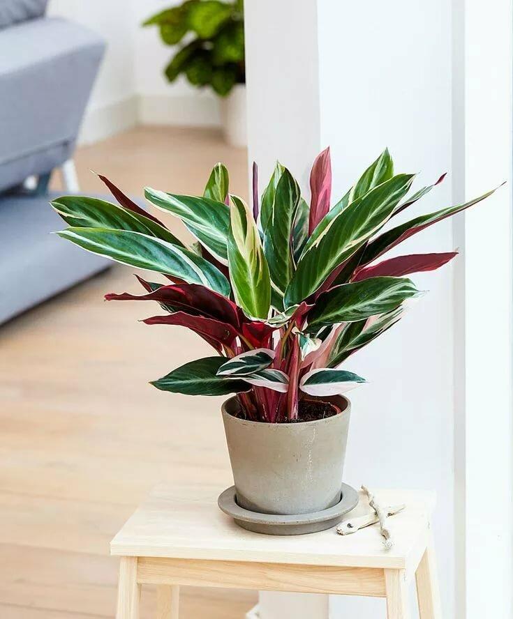 16 лучших тенелюбивых комнатных растений с названиями