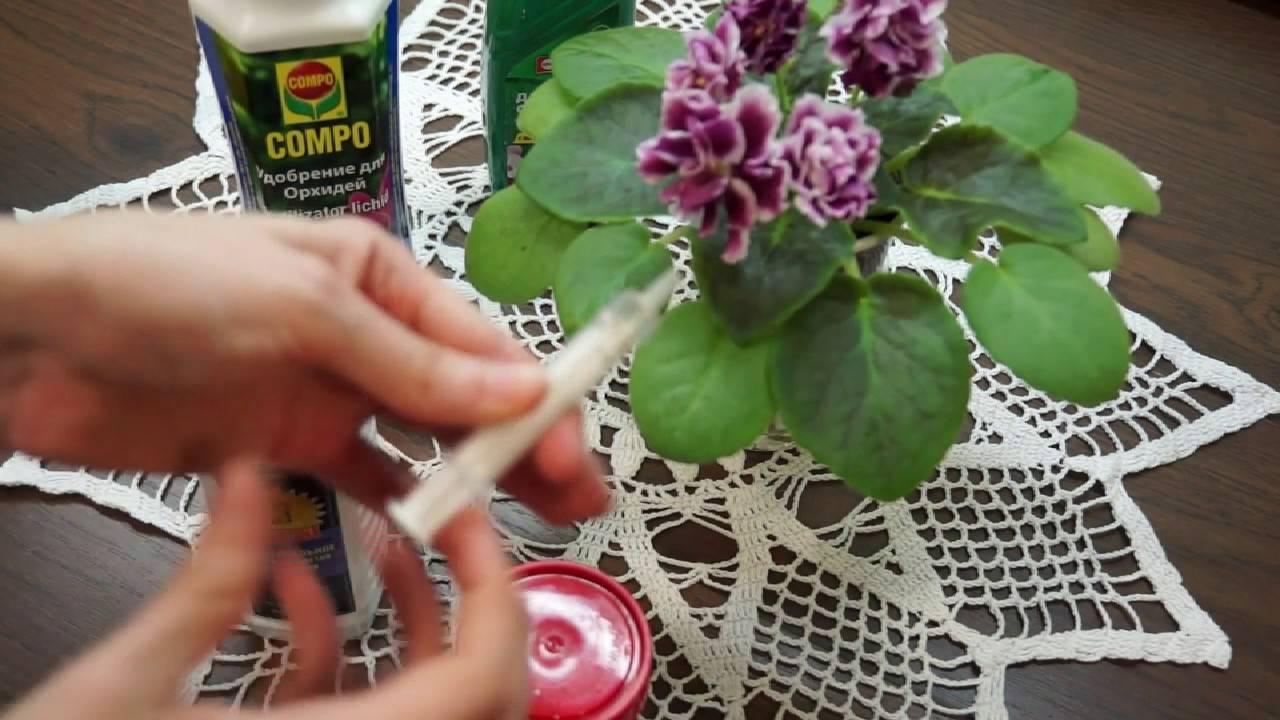 Комнатные фиалки: фото и названия, уход за цветком в домашних условиях