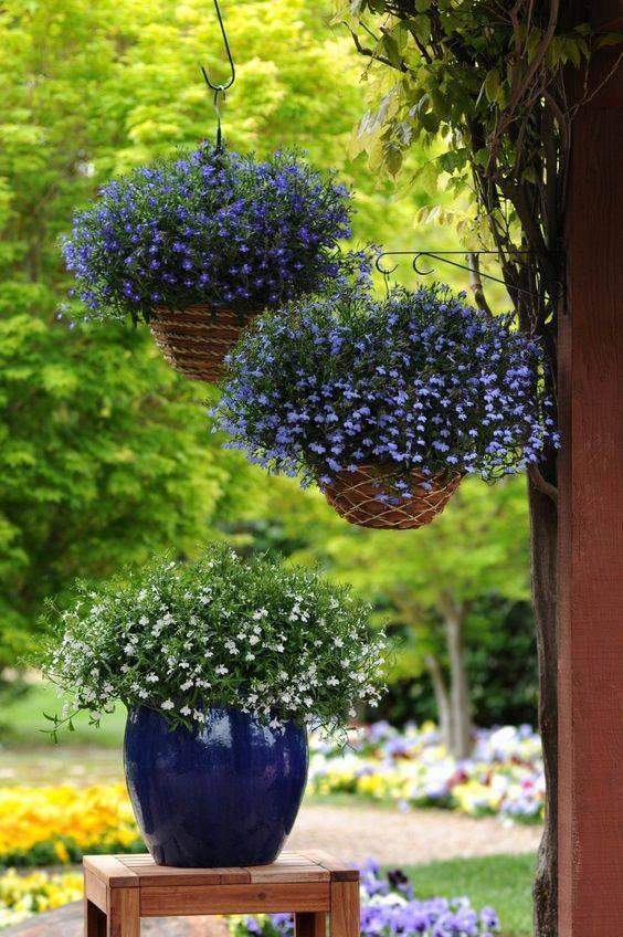 Ампельные цветы для балкона и сада: названия и фото
