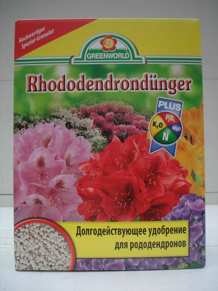 Когда и как правильно посадить рододендрон в открытый грунт