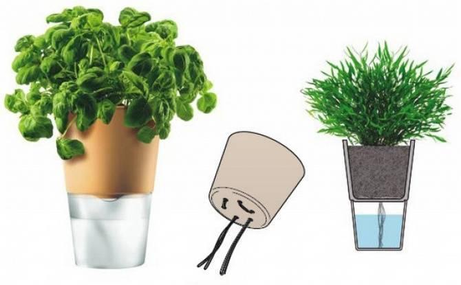 Способы полива кактусов зимой и летом: как правильно поливать кактусы в домашних условиях