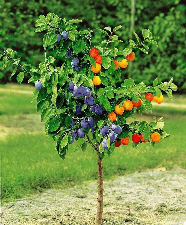 Плодовые деревья и кустарники для сада