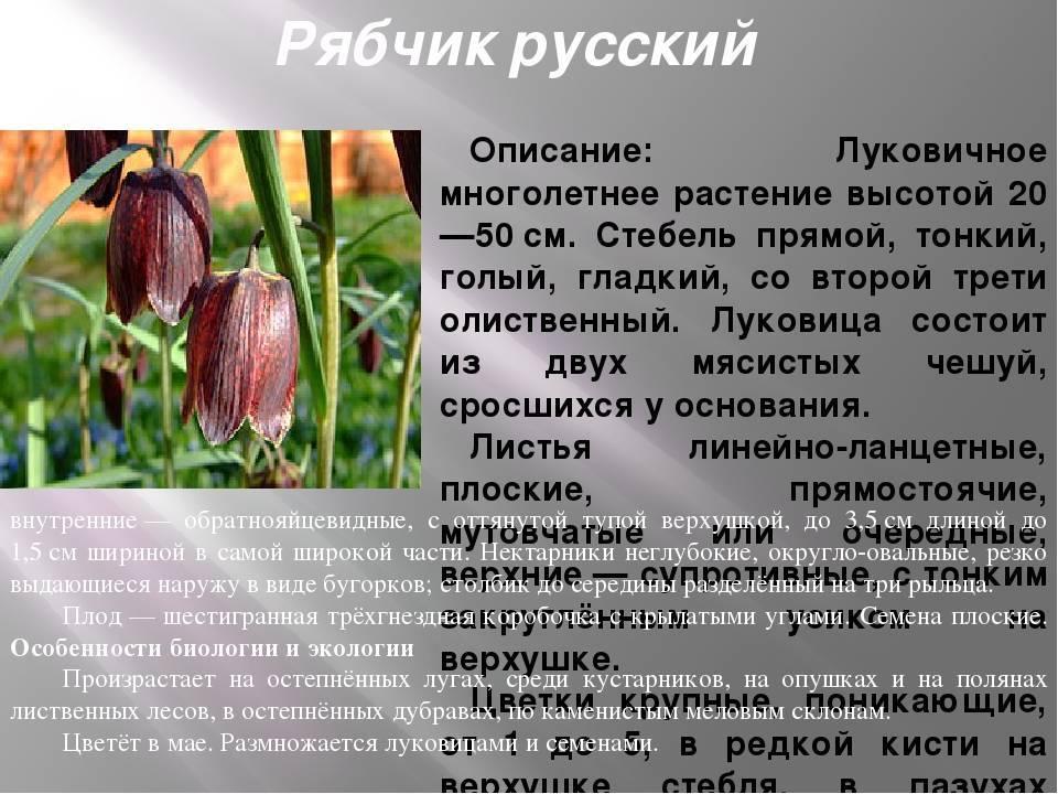 Цветы рябчики: фото видов и сортов, посадка и уход за рябчиками в открытом грунте