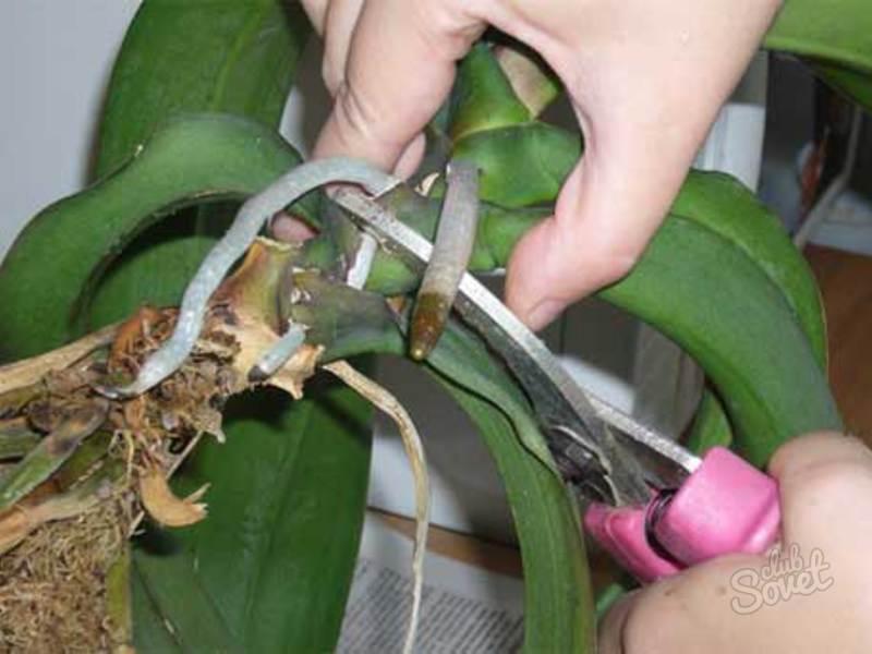 Как реанимировать орхидею: варианты восстановления и реанимирования цветка - pocvetam.ru