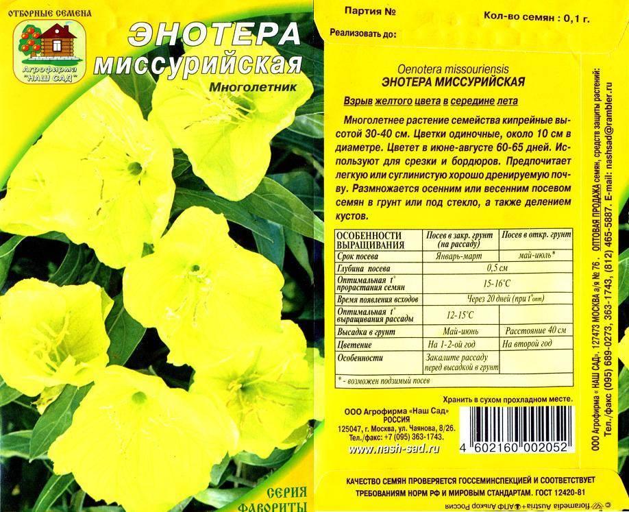 Энотера кустарниковая многолетняя: посадка и уход, выращивание из семян, фото