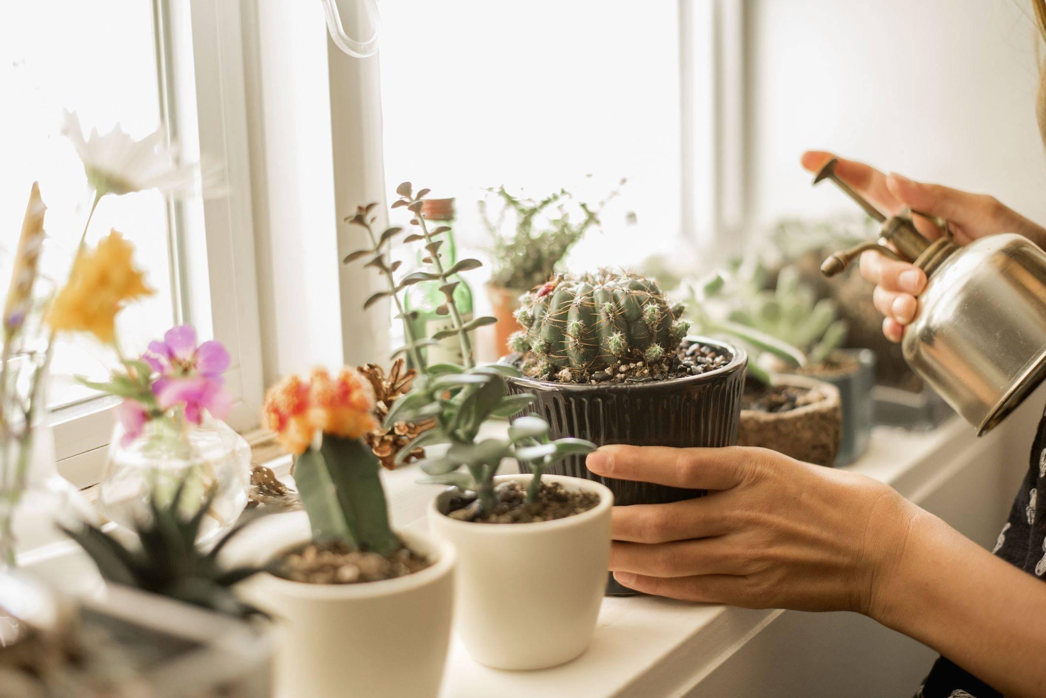 Суеверия и приметы о комнатных цветах — обеспечиваем себе комфорт