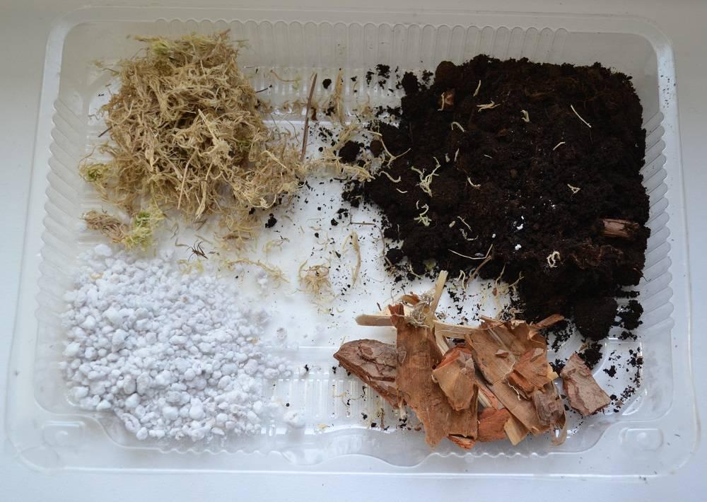 Состав готового грунта для глоксинии и подготовка почвы в домашних условиях