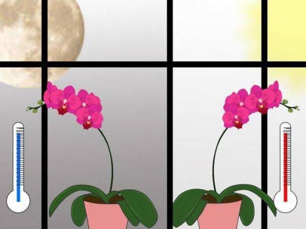 Цветок «лантана»: описание, фото, выращивание и уход в домашних условиях