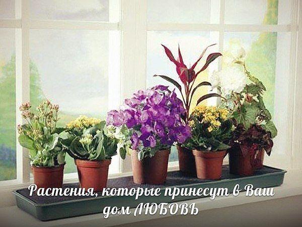 Домашние растения, которые привлекают в дом любовь
