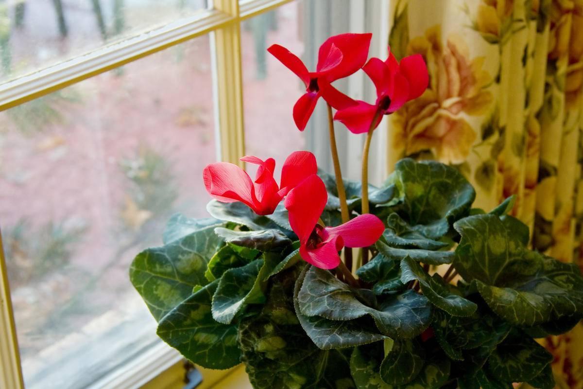 Комнатные растения, которые приносят счастье в дом