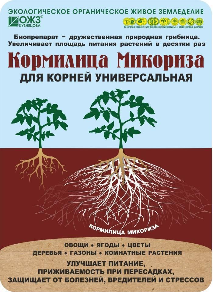 Варианты наращивания и стимуляторов роста для корней: примеры в грунте и другие