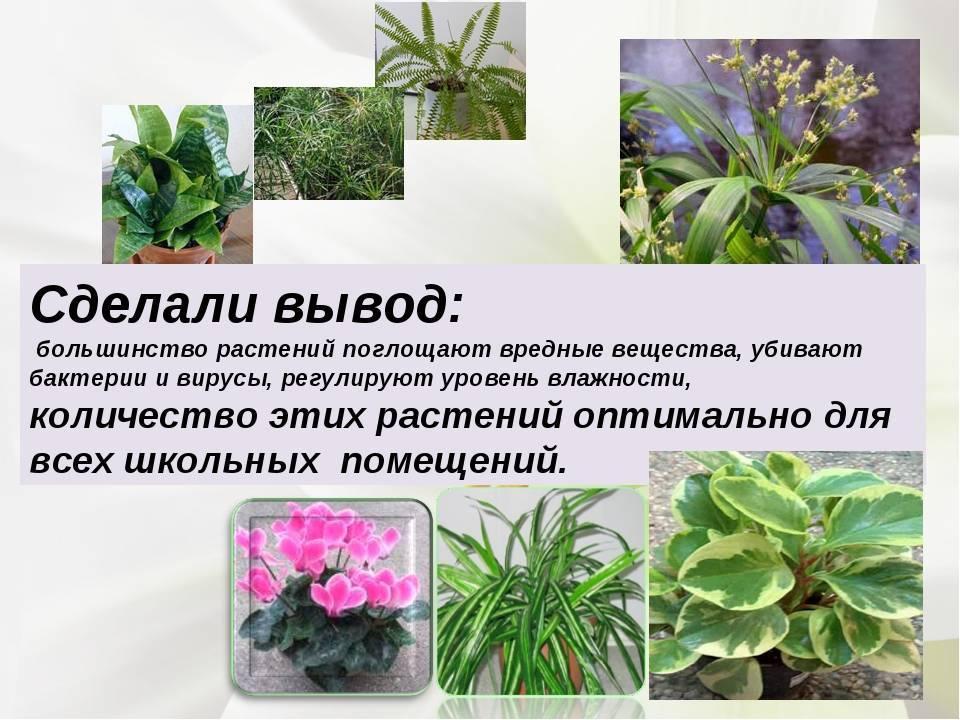 25 смертельно опасных комнатных растений. выбирай «зеленых друзей» с осторожностью!