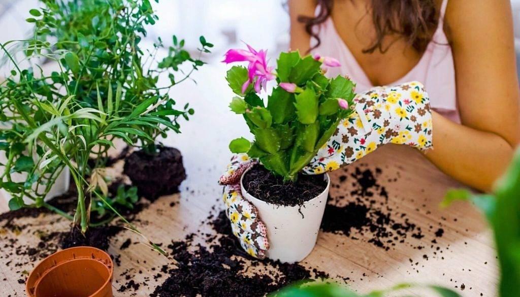 Как пересадить цветок? как пересадить комнатный цветок