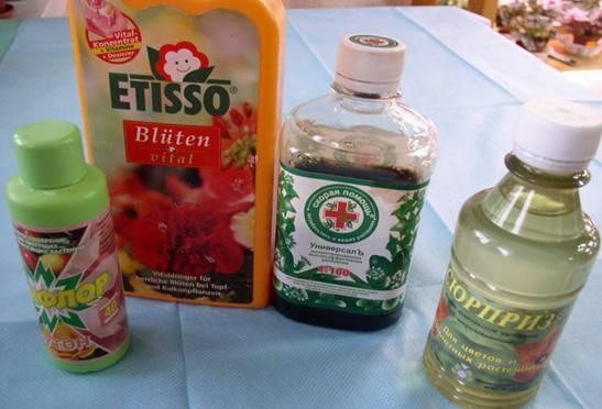 Чем подкормить фиалки для обильного цветения: народные средства и готовые удобрения
