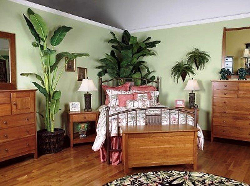Орхидея: приметы и суеверия для дома