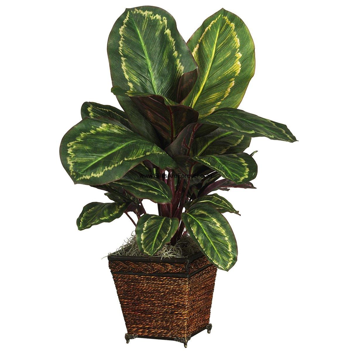 Все о комнатных декоративно-лиственных растениях и цветах с красивыми листьями