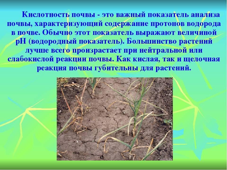 Если почва закисла... чем опасен кислый грунт? кислая почва: удобрения, подкормки