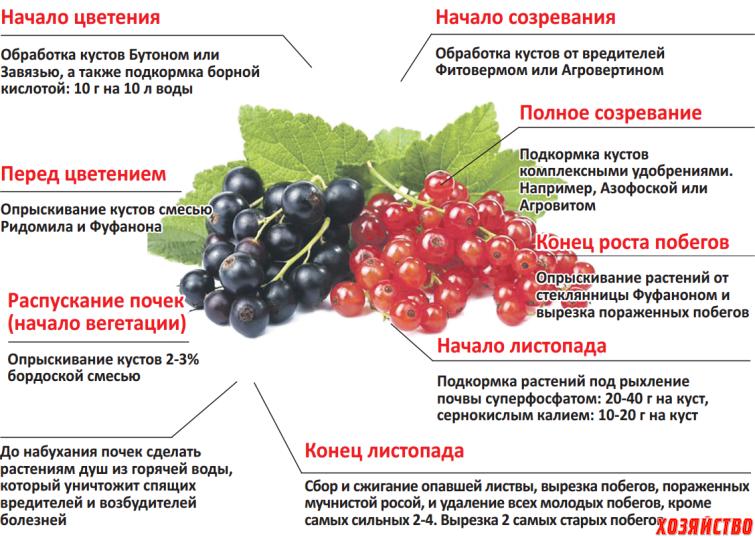 Как защитить растения от болезней и вредителей с помощью пищевой соды