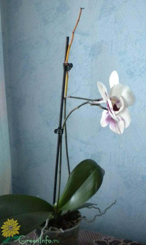 Если орхидея отцвела — что делать с ней дальше, как правильно организовать уход?