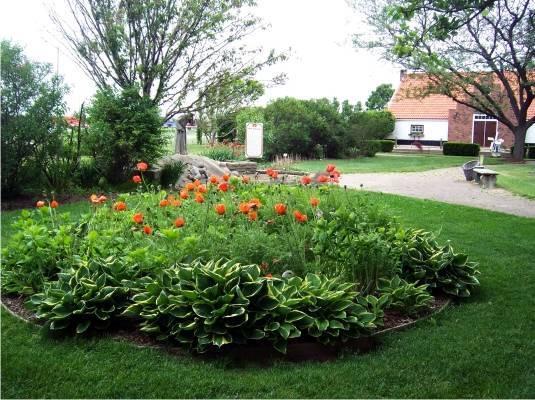 Посадка и уход за декоративным кустарником