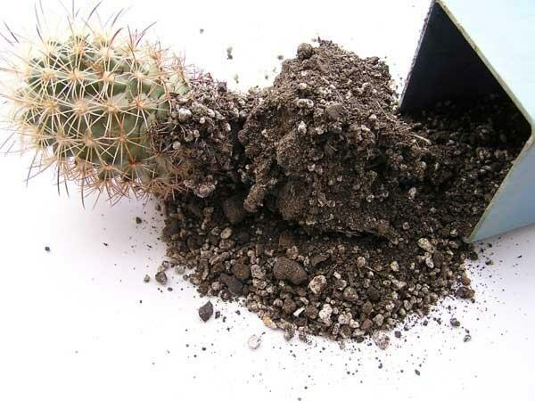 Грунт для кактусов своими руками, во что посадить кактус