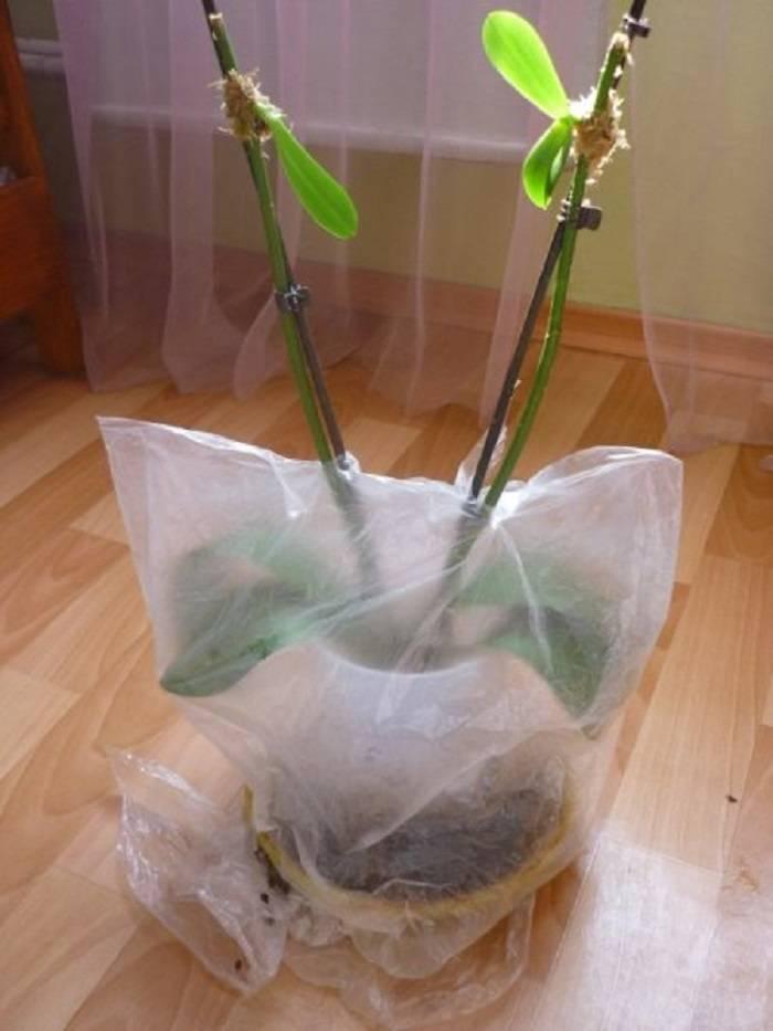 Как посадить орхидею: примеры в горшок и в домашних условиях