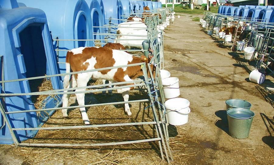 Возделывание кормового люпина