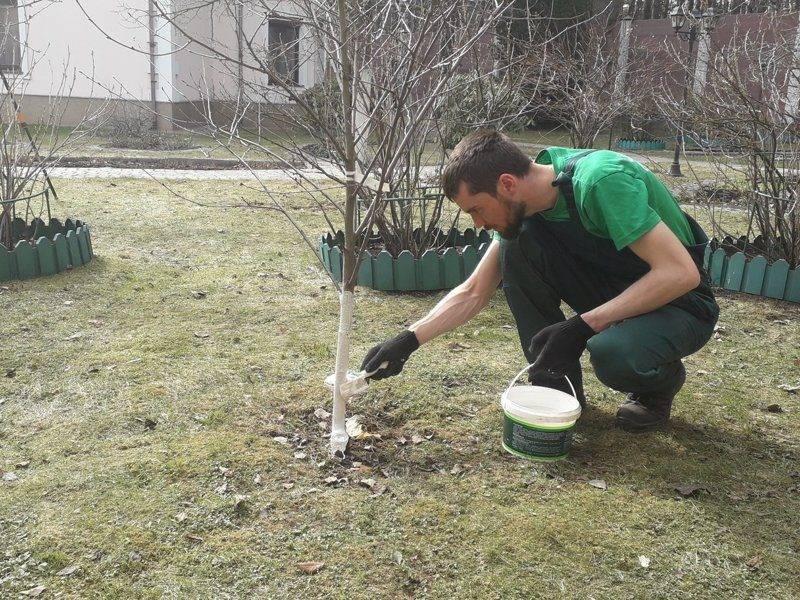 Весенняя обработка сада от вредителей и болезней: чем опрыскивать плодовые деревья и ягодные кустарники
