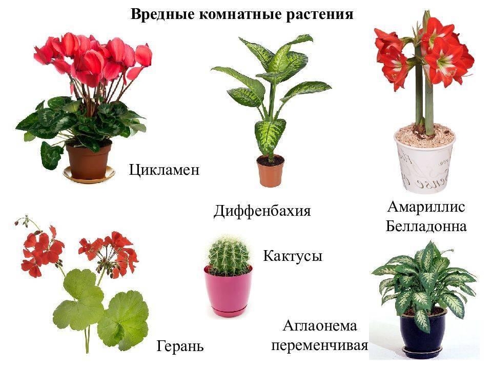 Какие комнатные растения ядовиты и могут вас убить. в чем опасность и вредность