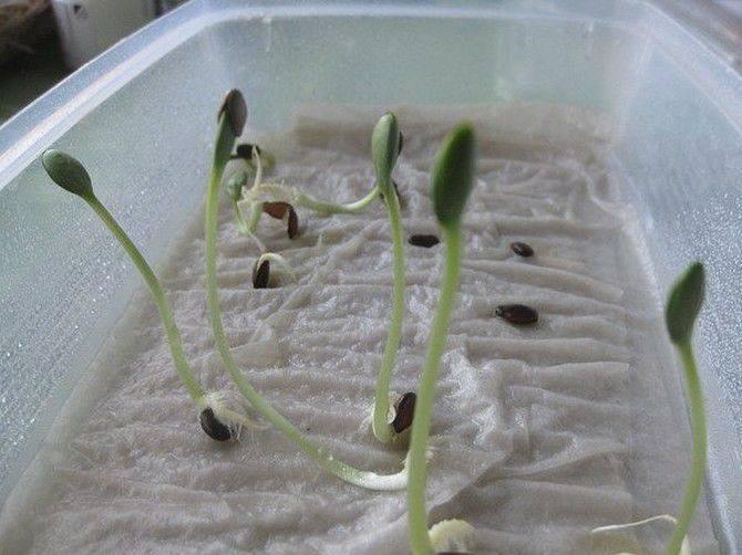 Как вырастить орхидею из семян в домашних условиях: пошаговая инструкция
