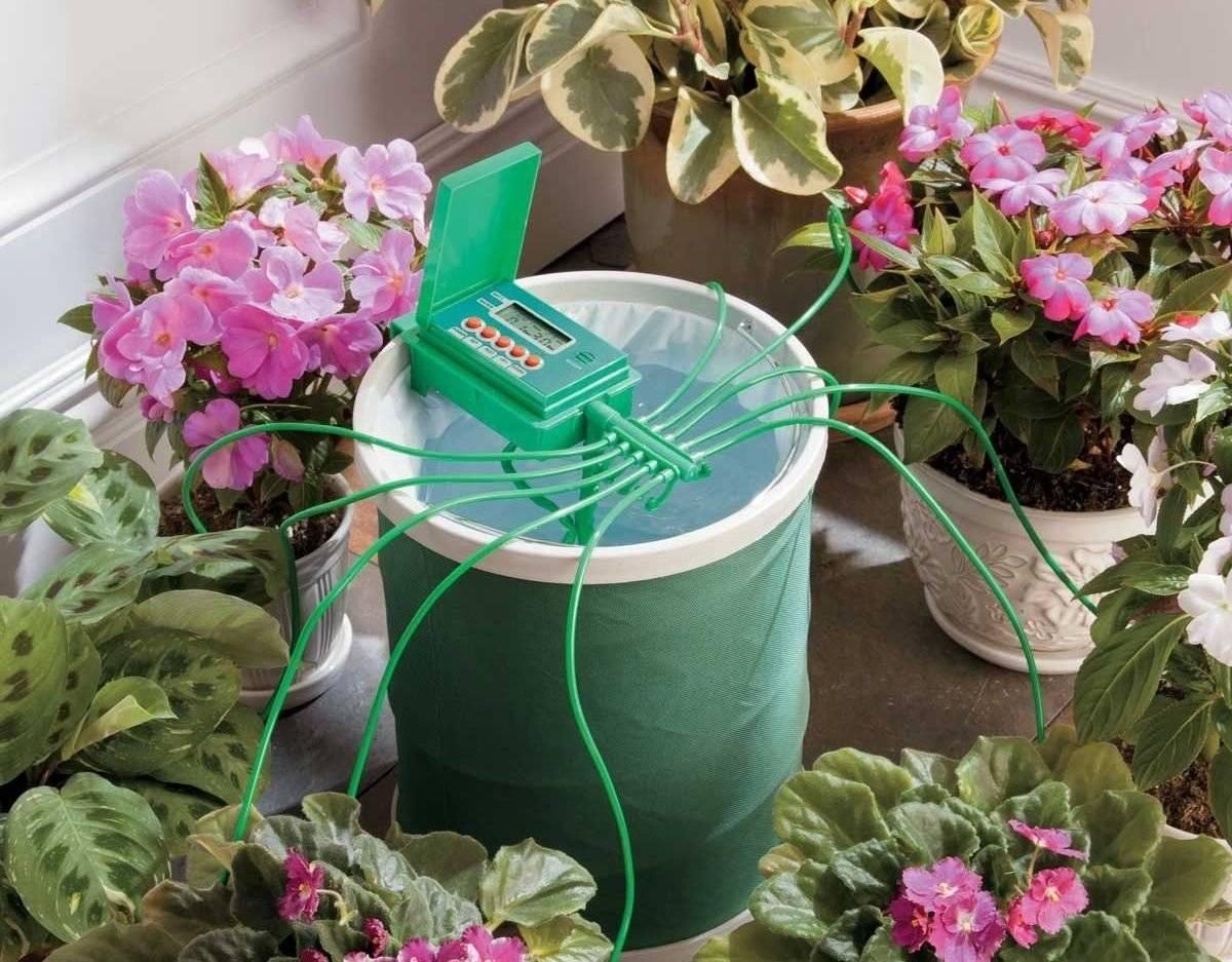 Лантана: описание, виды и уход за цветком в домашних условиях
