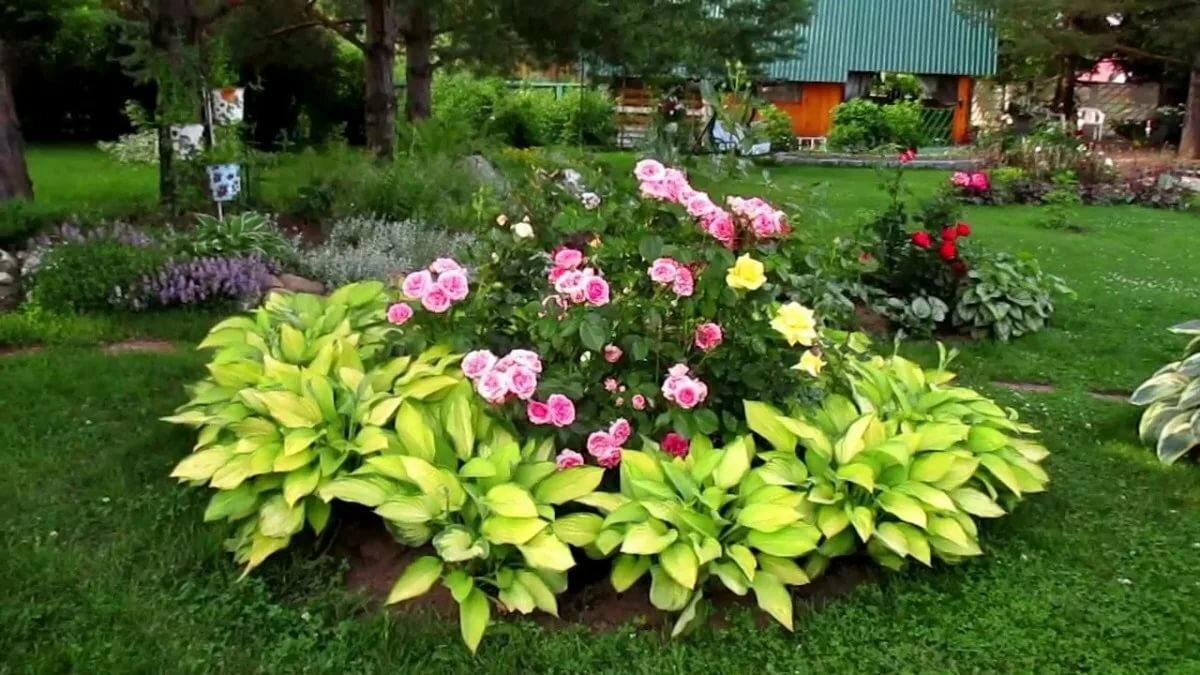 Сажаем астильбу в саду. посадка, уход, борьба с вредителями.