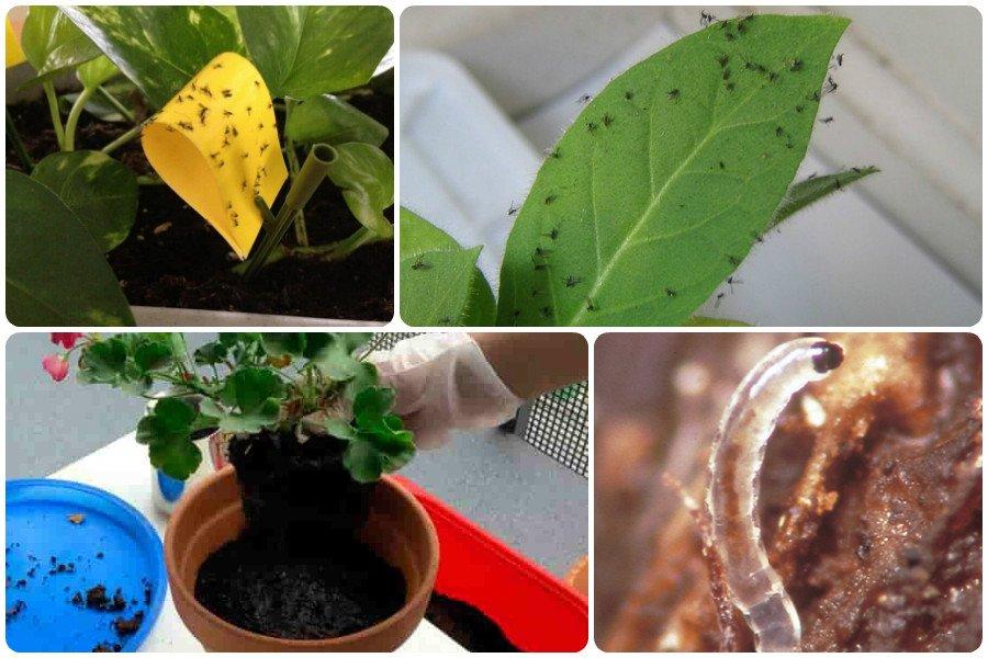 Болезни комнатных растений, как с ними бороться, фото вредителей