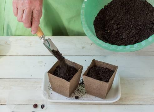 Выращиваем клещевину в открытом грунте