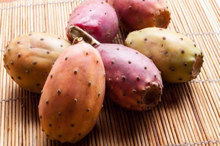 Виды кактусов со съедобными плодами