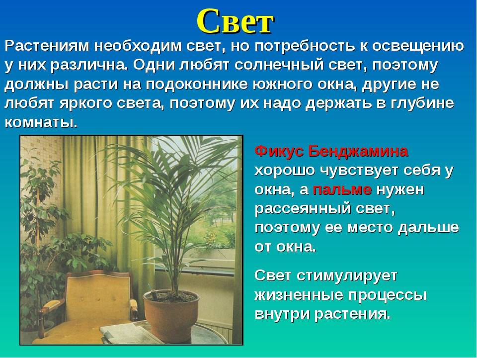 Гипоцирта: уход в домашних условиях, фото цветка, особенности выращивания нематантуса в открытом грунте, правила зимовки, болезни и вредители