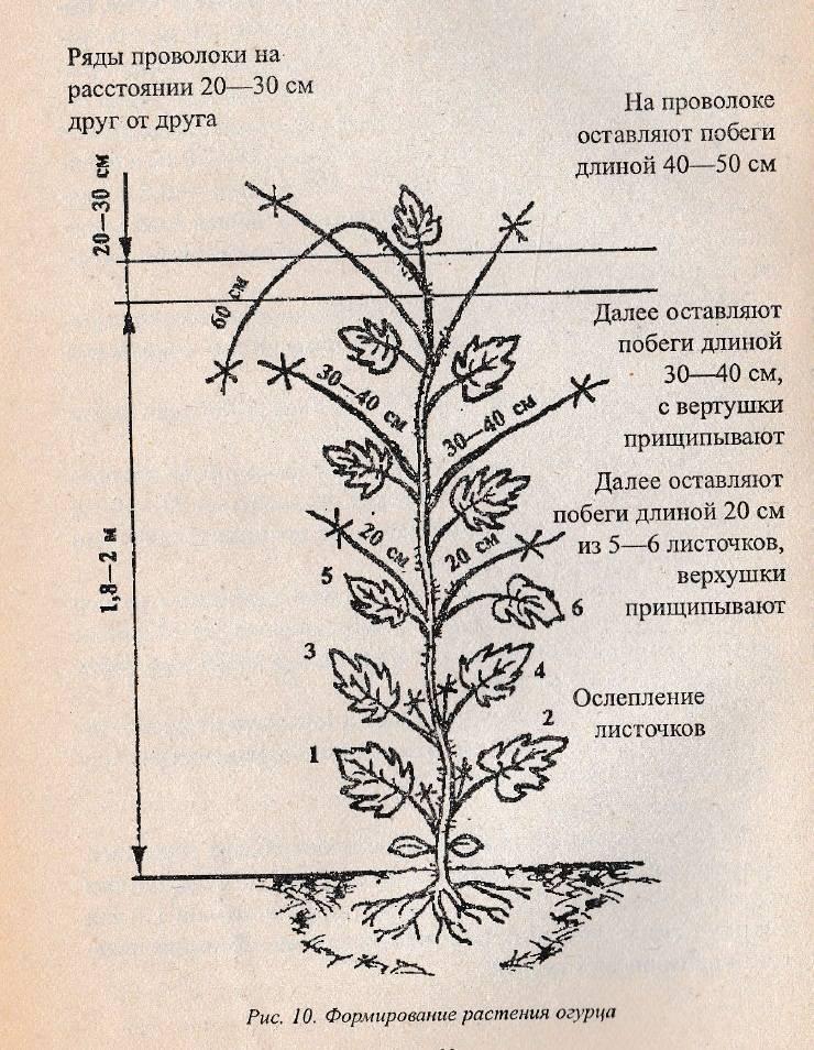 Характеристика георгин веселые ребята: выращивание, подкормка, как и когда цветут