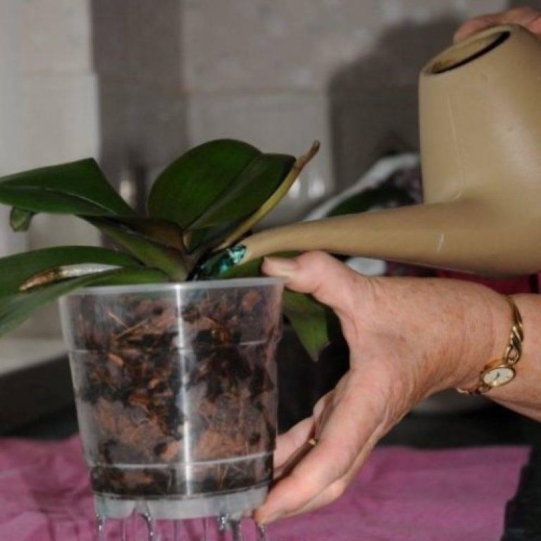 Когда и как долго цветут орхидеи в домашних условиях: несколько правил как зацвести орхидею после покупки.